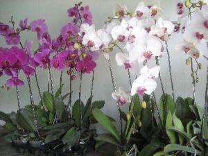 http://tipspetani.blogspot.com/2015/09/aneka-macam-anggrek-yang-mempesona.html